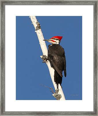 Bracing For Lunch Framed Print by Gerry Sibell
