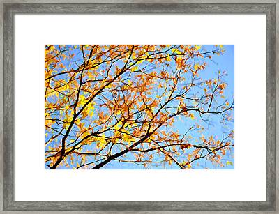 Branch Of Autumn Leaves 1 Framed Print by Lanjee Chee