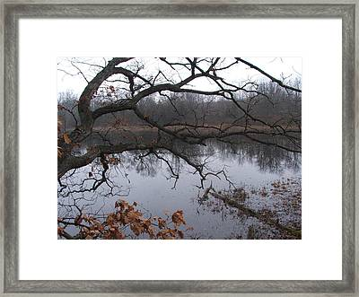 Branches And Pond Framed Print by Michael L Kimble