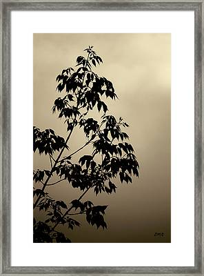 Branches And Sky Toned Framed Print by David Gordon