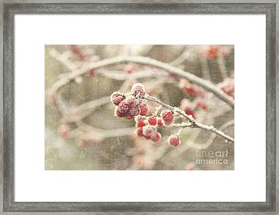Branches With Early Winter Frost With Red Berries Framed Print by Sandra Cunningham