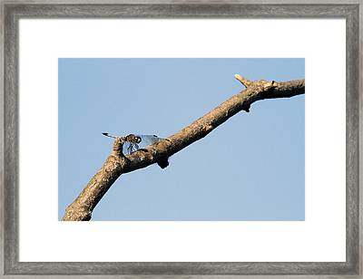 Branching Out Framed Print by Karol Livote