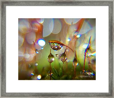 Brand New One Framed Print by Sally Siko