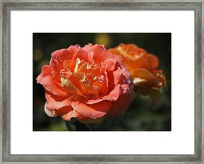 Brass Band Roses Framed Print by Rona Black