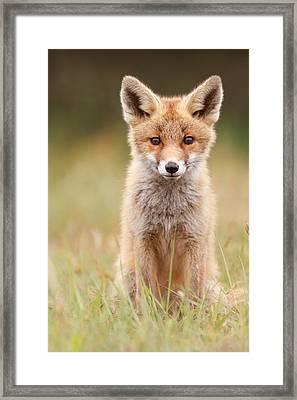 Brave New Fox Kit Framed Print by Roeselien Raimond