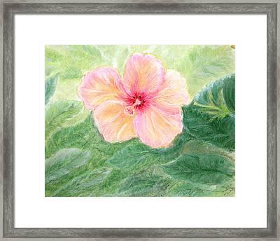 Brazil Flower Framed Print by Tina Swindell