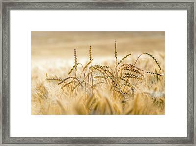 Bread Nr. 1 Framed Print by Mah FineArt