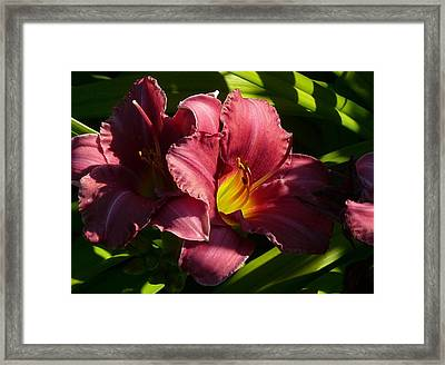 Breathless Framed Print by Connie Young