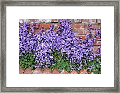 Brick Wall With Blue Flowers Framed Print by Carol Groenen
