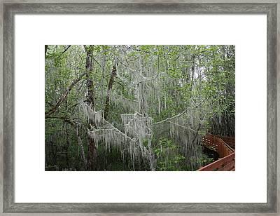 Bridal Veil Tree Framed Print by Mark Cheney
