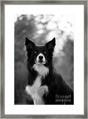 Bright Eyes Big Ears Framed Print by Susan Herber
