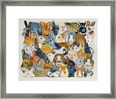 Bright Eyes Framed Print by Pat Scott