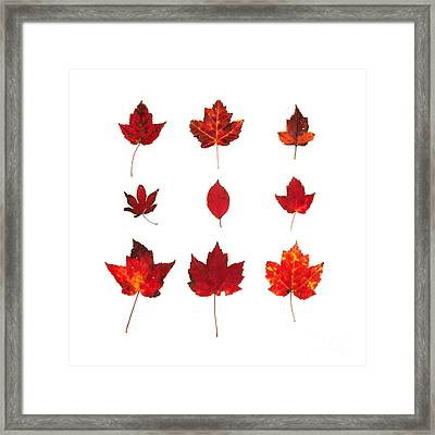 Bright Red Autumn Leaves Framed Print by Jennifer Booher