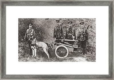 British Army Using Dogs To Pull A Framed Print by Vintage Design Pics