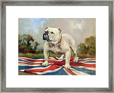 British Bulldog Framed Print by English School