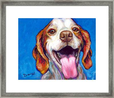 Brittany Spaniel Smiling Framed Print by Dottie Dracos