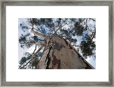 Broad Trunk Framed Print by Jean Booth