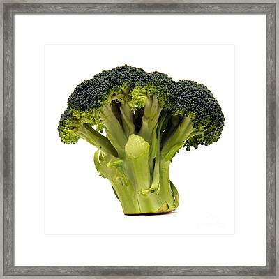 Broccoli  Framed Print by Olivier Le Queinec