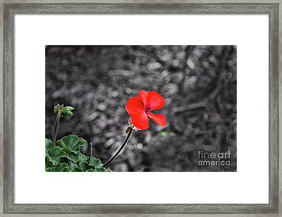 Broken And Alone Framed Print by Reese Lewis