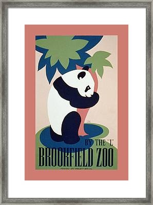 Brookfield Zoo Panda Framed Print by Unknown