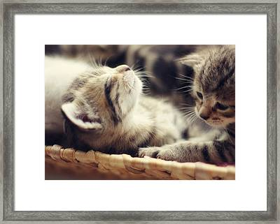 Brotherly Love Framed Print by Amy Tyler