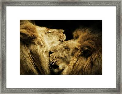 Brothers Framed Print by Animus  Photography