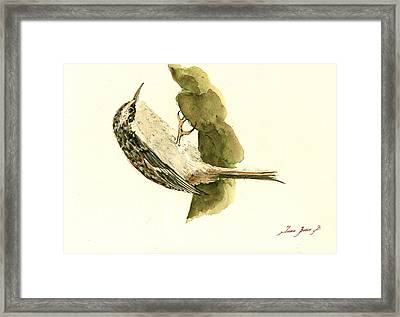 Brown Creeper Framed Print by Juan  Bosco