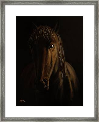 Brown Horse Framed Print by Radoslav Nedelchev