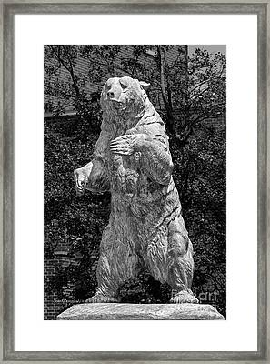 Brown University Bear Framed Print by University Icons