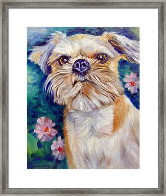 Brussels Griffon Framed Print by Lyn Cook