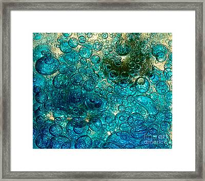 Bubble Chaos By Kaye Menner Framed Print by Kaye Menner