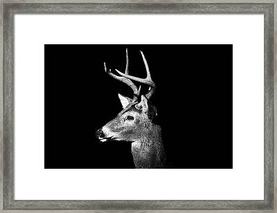 Buck In Black And White Framed Print by Malcolm MacGregor