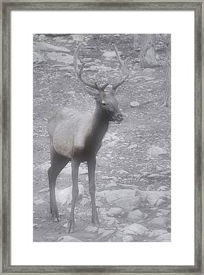 Buck In Fog On Hurricane Ridge - Olympic National Forest - Olympic National Park Wa Framed Print by Christine Till