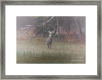 Buck In Foggy Bottoms Framed Print by Robert Frederick