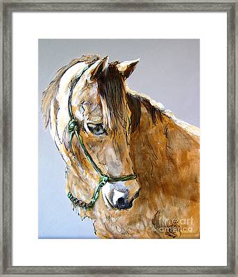 Buck Of The Morgan Horse Ranch Point Reyes National Seashore Framed Print by Paul Miller