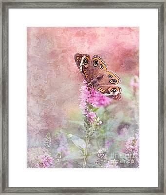Buckeye Bliss Framed Print by Betty LaRue