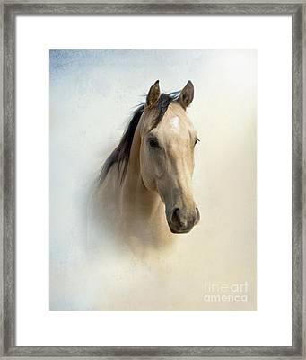 Buckskin Beauty Framed Print by Betty LaRue