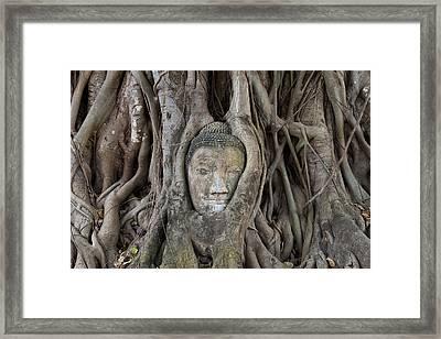 Buddha Head In Tree, Temple Wat Mahatat, Thailand Framed Print by Peter Adams