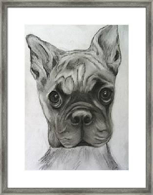 Buddy Boxer Framed Print by Jacquie King