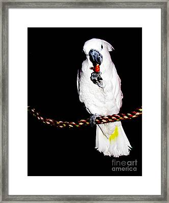 Buddy Framed Print by Pamela Iris Harden