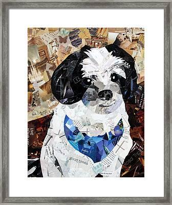 Buddy Framed Print by Paula Dickerhoff