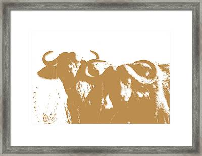 Buffalo 3 Framed Print by Joe Hamilton