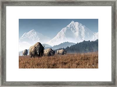 Buffalo Grazing Framed Print by Daniel Eskridge