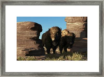 Buffalo Guard Framed Print by Daniel Eskridge