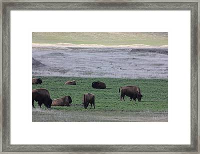Buffalo Range Framed Print by Linda Meyer