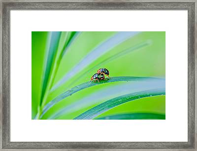 Bug Mating Framed Print by Az Jackson