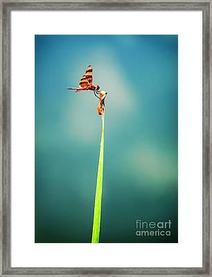 Bug Olympics Xvii Framed Print by Charles Dobbs