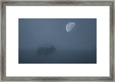 Bugle At The Moon Framed Print by Darren White