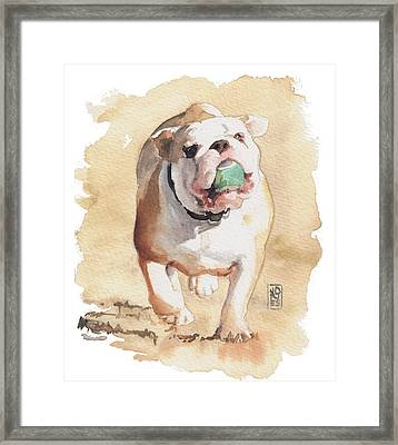 Bull And Ball Framed Print by Debra Jones