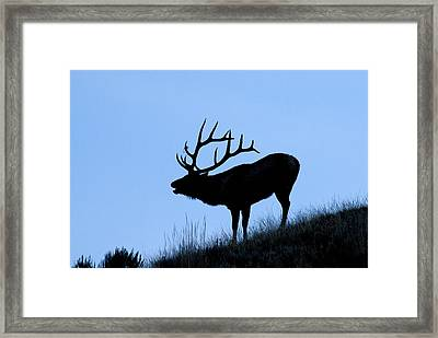 Bull Elk Silhouette Framed Print by Larry Ricker